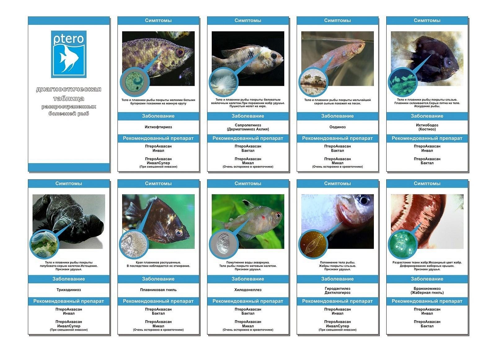 вы повышаете концентрацию меди до эффективного уровня (02-04 мг/л) и безопасного для аквариумных рыб